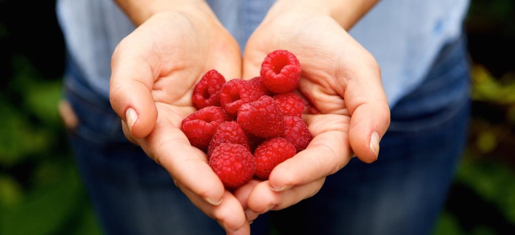 Close up portrait of handful of fresh raspberries